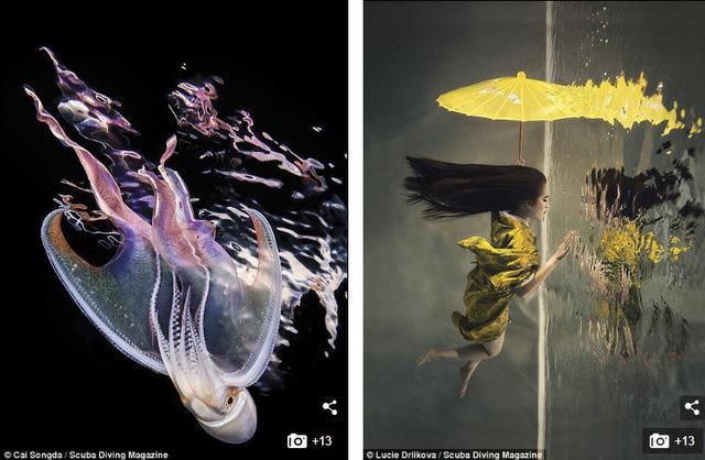 """Những bức ảnh chụp dưới nước đẹp """"ngộp thở"""" - Ảnh 8."""