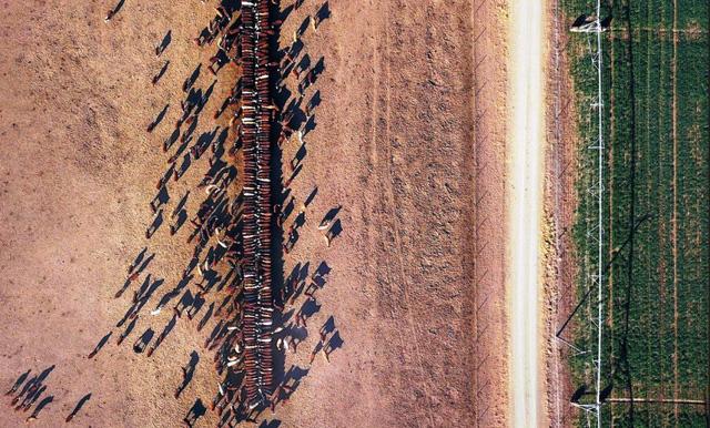 Australia hỗ trợ nông dân bị hạn hán - Ảnh 5.