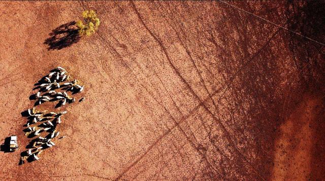 Australia hỗ trợ nông dân bị hạn hán - Ảnh 15.