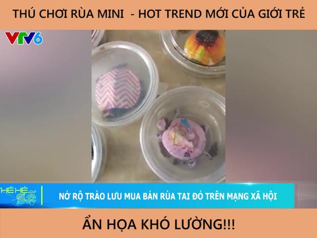 Nở rộ trào lưu mua bán rùa tai đỏ trên mạng xã hội - Ảnh 4.