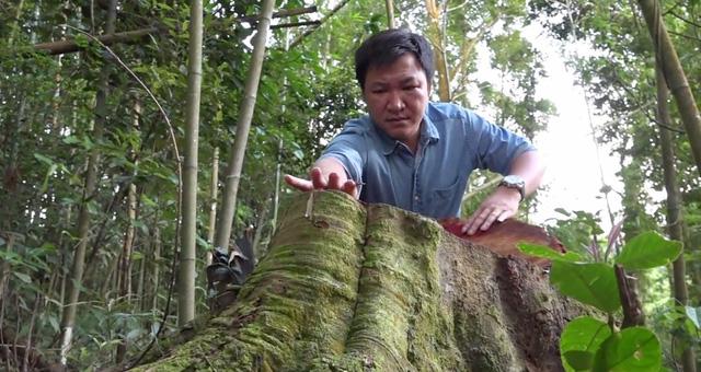 Toàn cảnh vụ phá rừng tự nhiên quy mô lớn tại Bắc Kạn (19h ngày 8/8, VTV1) - Ảnh 1.