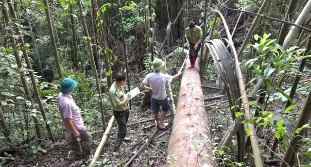 Toàn cảnh vụ phá rừng tự nhiên quy mô lớn tại Bắc Kạn (19h ngày 8/8, VTV1) - Ảnh 3.