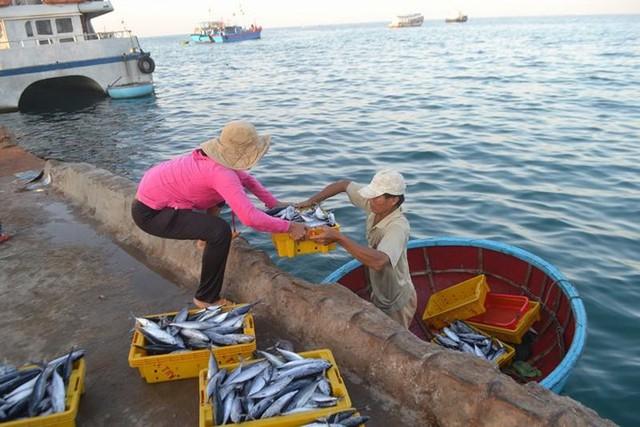 Đi chợ cá trên đảo Lý Sơn - Ảnh 4.