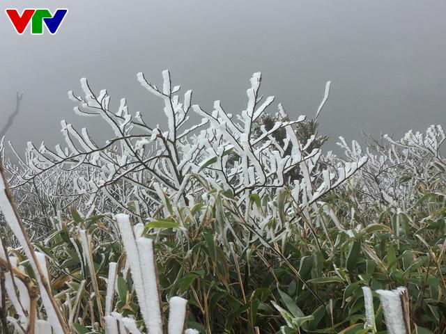 Băng tuyết tuyệt đẹp ở Sa Pa khiến du khách thích thú - Ảnh 4.