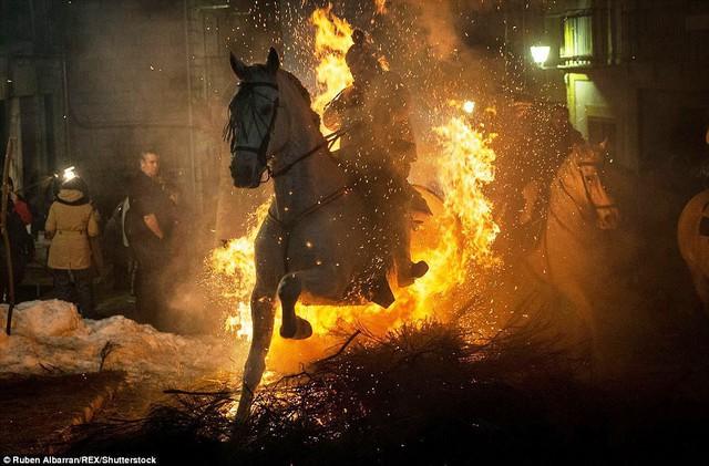 Lễ hội thử thách những chú ngựa ở Tây Ban Nha - Ảnh 10.