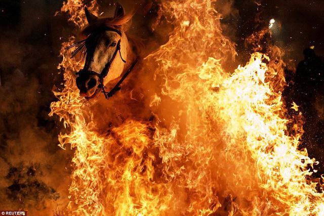 Lễ hội thử thách những chú ngựa ở Tây Ban Nha - Ảnh 9.