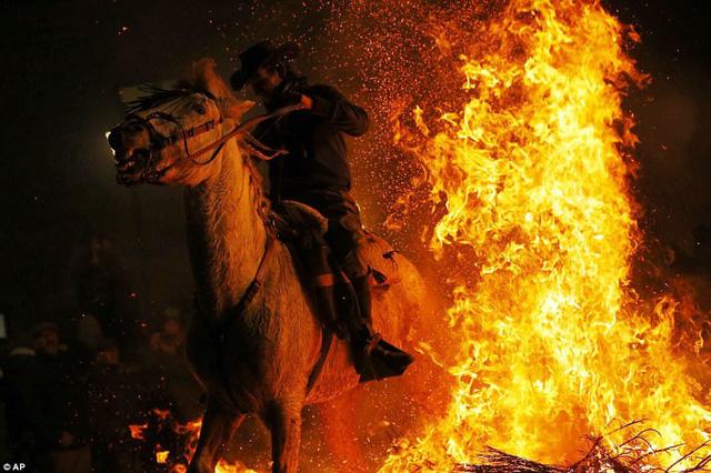 Lễ hội thử thách những chú ngựa ở Tây Ban Nha - Ảnh 4.