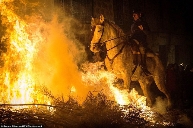 Lễ hội thử thách những chú ngựa ở Tây Ban Nha - Ảnh 2.