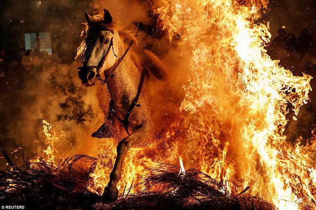 Lễ hội thử thách những chú ngựa ở Tây Ban Nha - Ảnh 1.