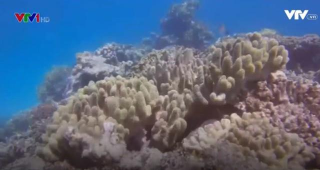 """Rạn san hô Great barrier (Australia) đang """"kêu cứu"""" - Ảnh 2."""