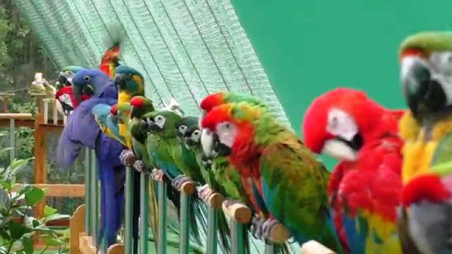 Khu vườn nhiều chim nhất thế giới - Ảnh 4.