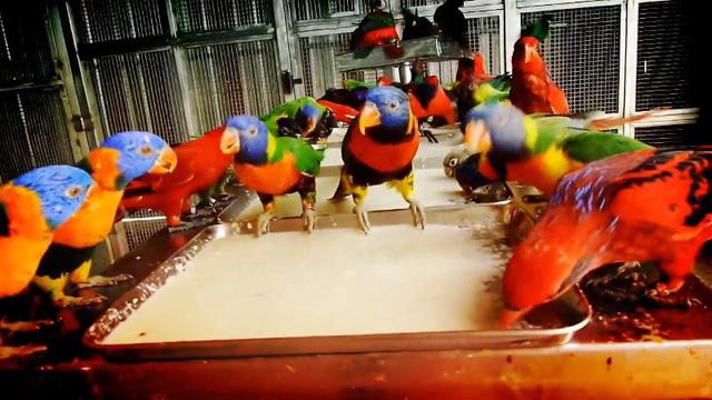 Khu vườn nhiều chim nhất thế giới - Ảnh 2.