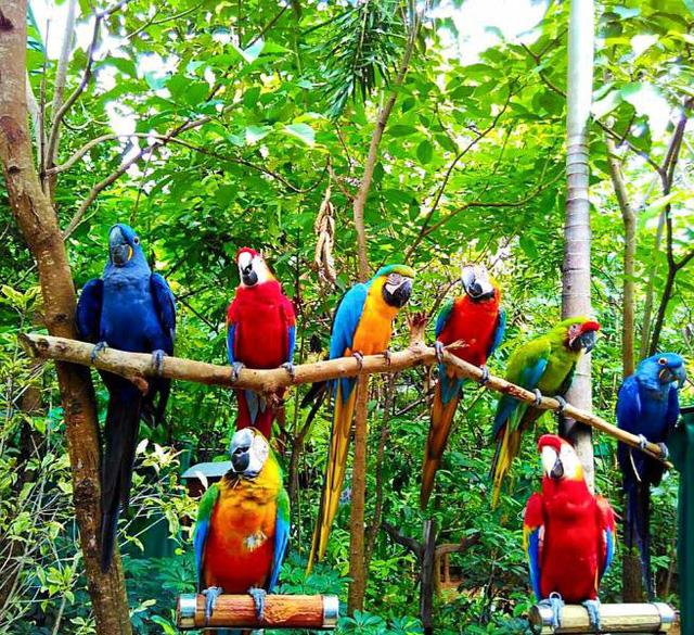 Khu vườn nhiều chim nhất thế giới - Ảnh 6.