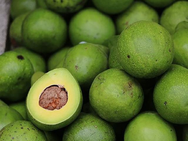 Những điều có thể bạn chưa biết về trái bơ - Ảnh 4.