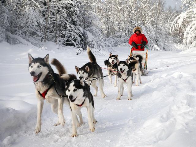 Xe chó kéo - Dịch vụ du lịch siêu hot ở Nga - Ảnh 1.