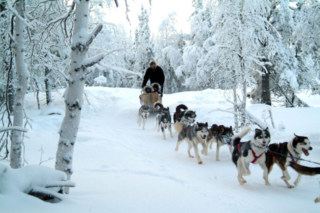 Xe chó kéo - Dịch vụ du lịch siêu hot ở Nga - Ảnh 3.