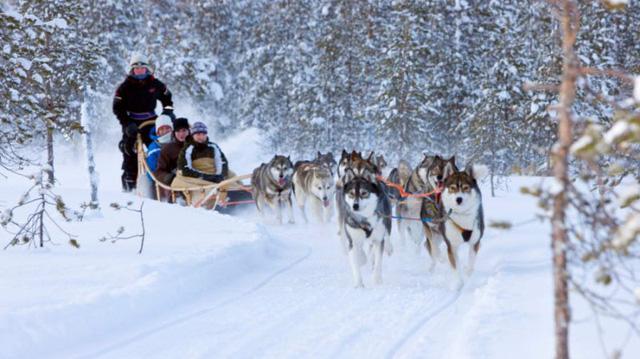 Xe chó kéo - Dịch vụ du lịch siêu hot ở Nga - Ảnh 4.