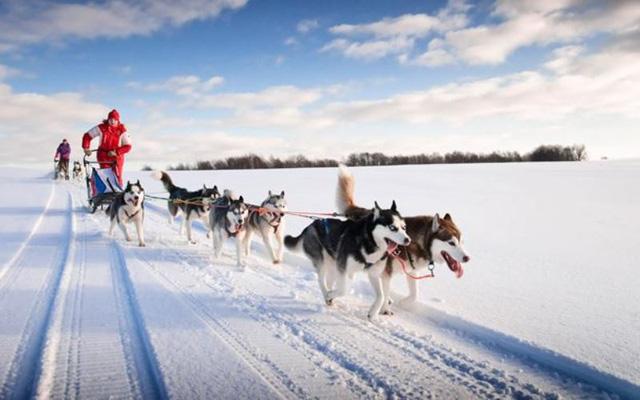 Xe chó kéo - Dịch vụ du lịch siêu hot ở Nga - Ảnh 6.