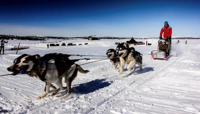 Xe chó kéo - Dịch vụ du lịch siêu hot ở Nga - Ảnh 7.