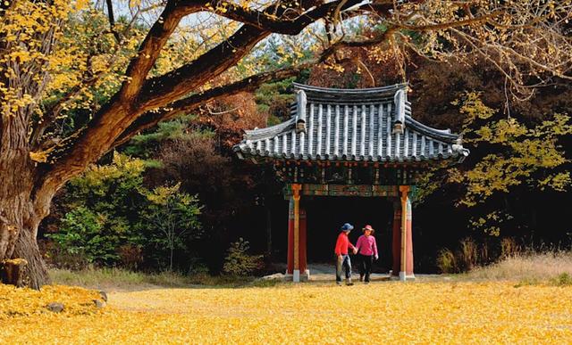 Khám phá 4 mùa rực rỡ của thiên đường du lịch Gyeongsangbuk - ảnh 2