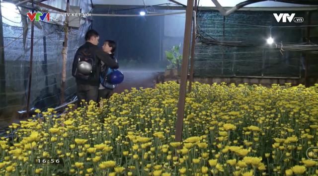 Hoa cúc vàng trong bão nối sóng Cung đường tội lỗi từ 5/1 trên VTV3 - Ảnh 5.