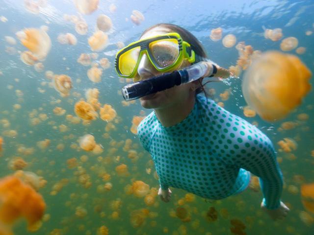 Lạc vào tiên cảnh khi bơi giữa hồ sứa Paula - Ảnh 2.