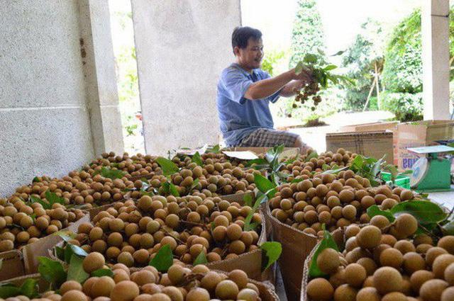 Xuất khẩu rau quả sang Trung Quốc giảm mạnh - Ảnh 1.
