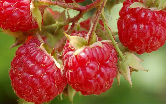 8 loại trái cây giúp giảm cân - Ảnh 4.