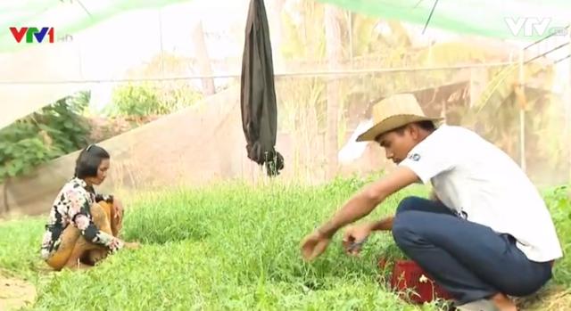 Phong trào trồng rau hữu cơ ở Campuchia - Ảnh 1.