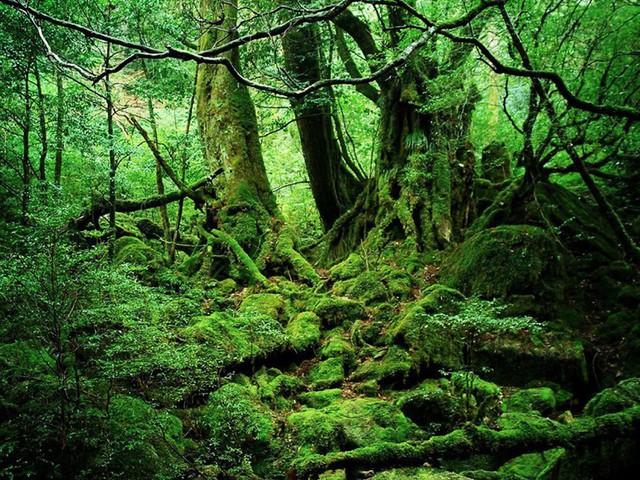 Ngỡ ngàng trước cảnh sắc tuyệt đẹp của thiên nhiên - Ảnh 13.