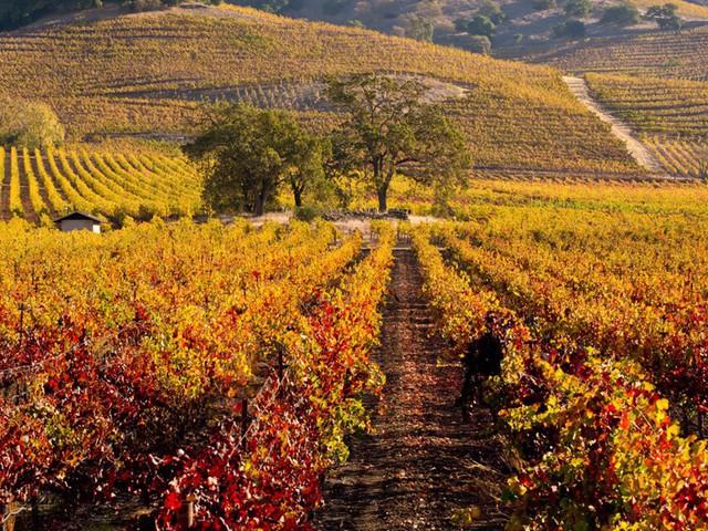 Xốn xang trước vẻ đẹp rực rỡ của mùa thu trên thế giới - Ảnh 4.