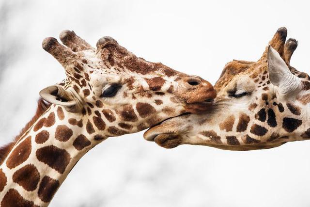 Khoảnh khắc thân mật của các loài động vật khiến chúng ta ghen tị - ảnh 1