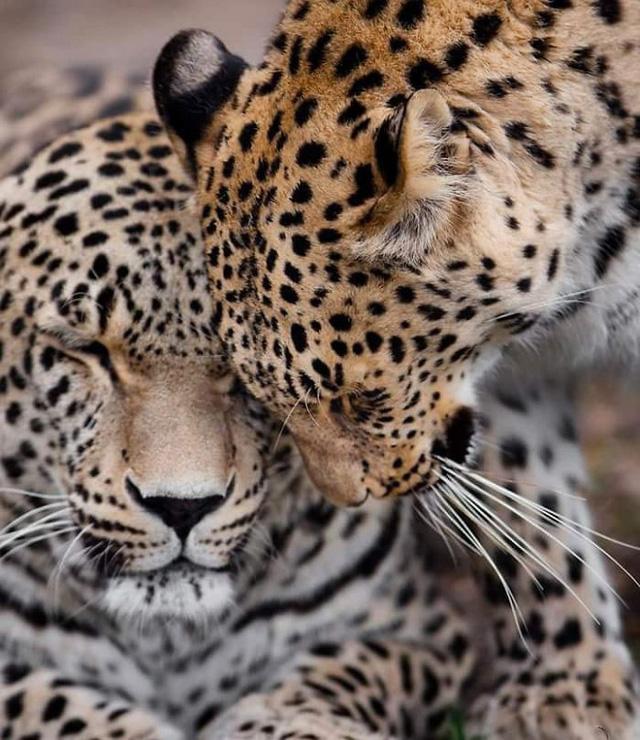 Khoảnh khắc thân mật của các loài động vật khiến chúng ta ghen tị - ảnh 2