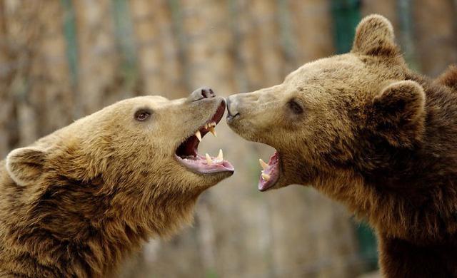 Khoảnh khắc thân mật của các loài động vật khiến chúng ta ghen tị - ảnh 11