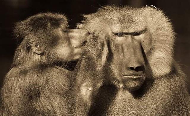 Khoảnh khắc thân mật của các loài động vật khiến chúng ta ghen tị - ảnh 12
