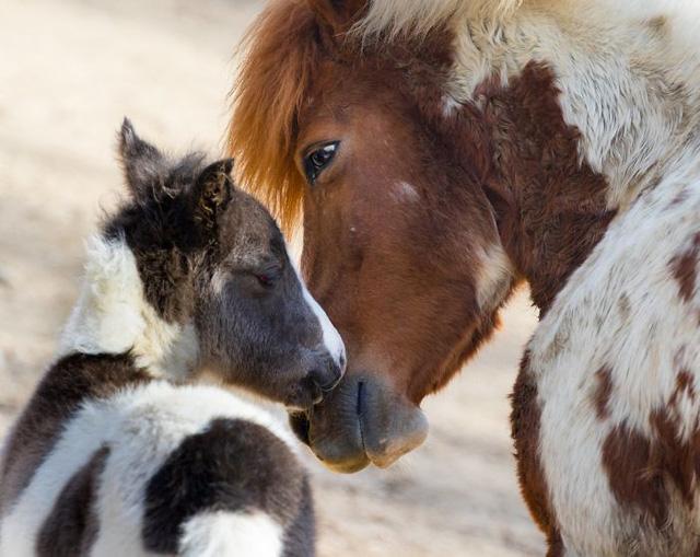 Khoảnh khắc thân mật của các loài động vật khiến chúng ta ghen tị - ảnh 3
