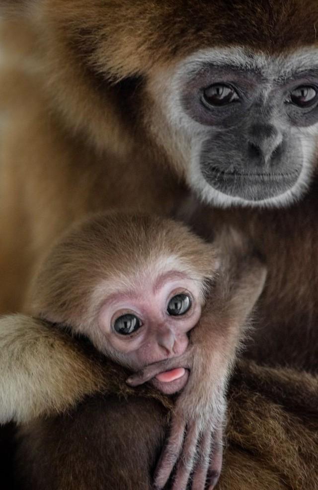 Khoảnh khắc thân mật của các loài động vật khiến chúng ta ghen tị - ảnh 5