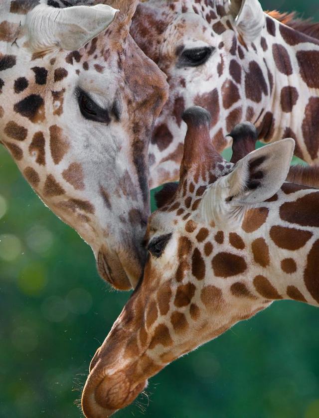 Khoảnh khắc thân mật của các loài động vật khiến chúng ta ghen tị - ảnh 6
