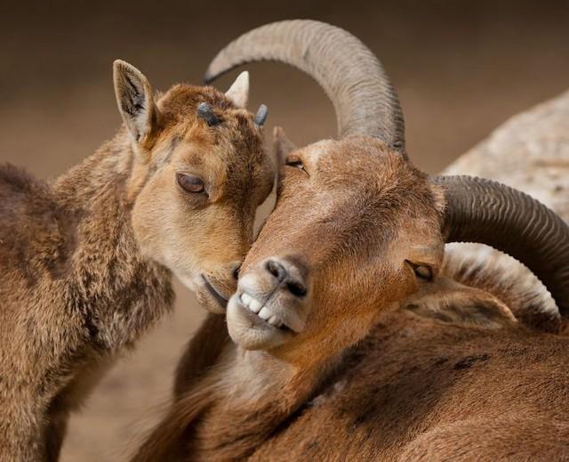 Khoảnh khắc thân mật của các loài động vật khiến chúng ta ghen tị - ảnh 7