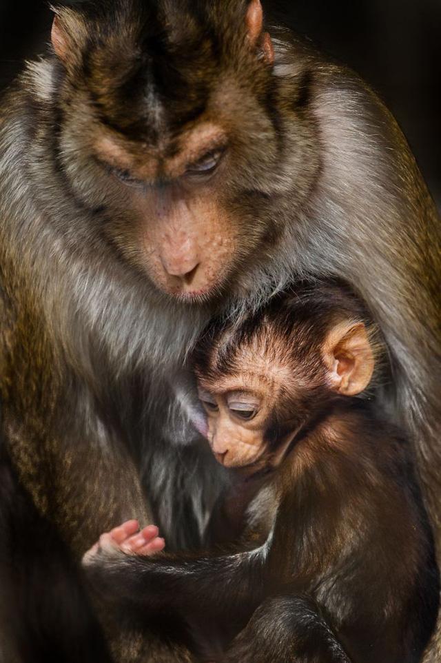 Khoảnh khắc thân mật của các loài động vật khiến chúng ta ghen tị - ảnh 8