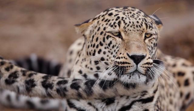 Khoảnh khắc thân mật của các loài động vật khiến chúng ta ghen tị - ảnh 9