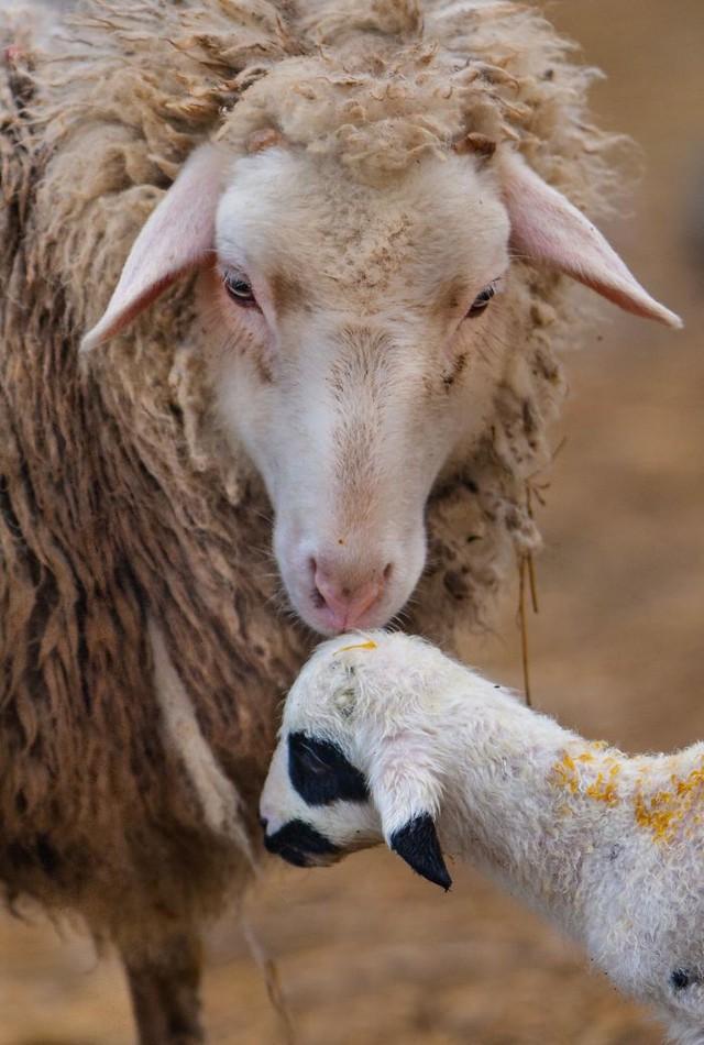 Khoảnh khắc thân mật của các loài động vật khiến chúng ta ghen tị - ảnh 10