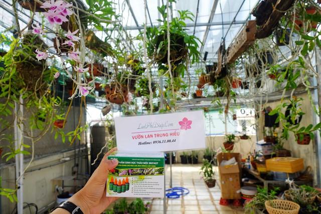 Hối hận vì trồng phong lan sai cách ngay tại nhà - Ảnh 1.