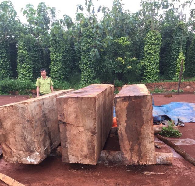 Đăk Nông: Thu giữ gần 10 m3 gỗ được cất giấu tại rẫy hồ tiêu, cà phê - Ảnh 1.