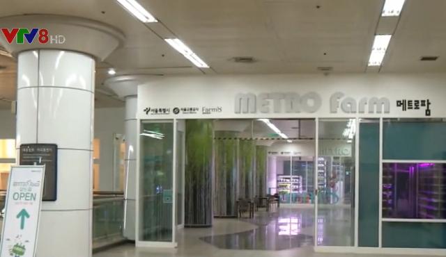 Hàn Quốc: Nông trại thông minh dưới ga tàu điện ngầm - Ảnh 1.
