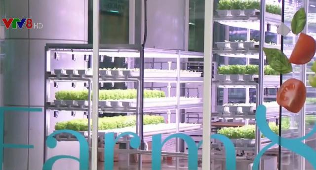 Hàn Quốc: Nông trại thông minh dưới ga tàu điện ngầm - Ảnh 2.