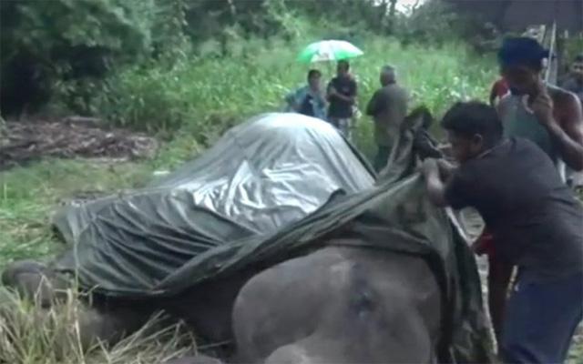Voi Sri Lanka chết vì chở khách du lịch đến kiệt sức - Ảnh 1.