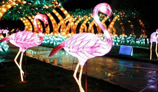 Rực rỡ sắc màu lễ hội ánh sáng nâng cao nhận thức bảo vệ biển - Ảnh 2.