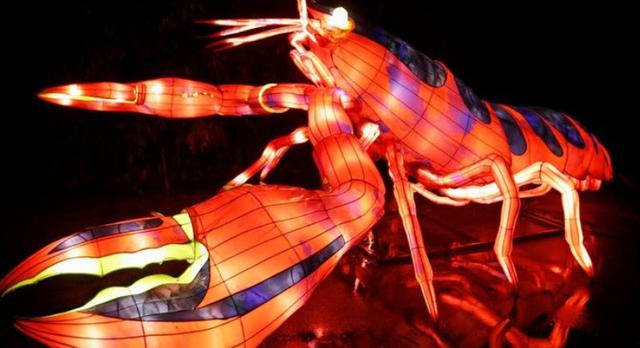 Rực rỡ sắc màu lễ hội ánh sáng nâng cao nhận thức bảo vệ biển - Ảnh 3.