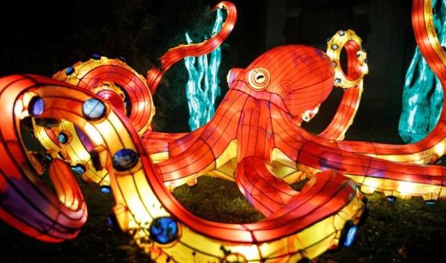 Rực rỡ sắc màu lễ hội ánh sáng nâng cao nhận thức bảo vệ biển - Ảnh 5.